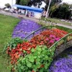 Ландшафтный дизайн на даче, как сделать красивый цветник, цветники, клумбы, на даче, своими руками