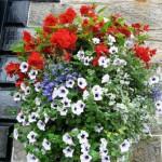 cvetniki1