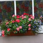 cvetniki4