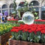 Bellagio Gardens Лас-Вегас, США,знаменитые сады,самые красивые цветники мира,красивые цветники