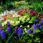 Нерегулярная клумба, клумбы цветов, клумбы +своими руками, клумбы +и цветники, озеленение, альпийская горка