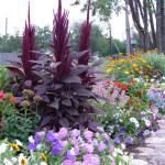 клумбы цветов,клумбы +своими руками,клумбы +и цветники,озеленение,альпийская горка