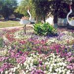 Классический вид клумб, цветники в саду, клумбы для дачи