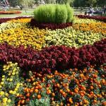 кольцевые клумбы, альпийская горка, ландшафтный дизайн, газон, садоводство, цветники, цветники +своими руками,+ flower with their hands, bed, flower, Landscaping