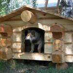 Будка для собаки, будка +для собаки +своими руками, куплю будку +для собаки, будка +для собаки чертеж, +как сделать будку +для собаки, +как построить будку +для собаки
