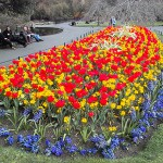 Классический вид клумбы, цветники в саду, клумбы
