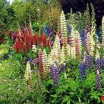 Классический вид клумбы, цветники, клумбы, высаживают