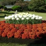 Классический вид клумб для сада, цветники на даче, красивые клумбы