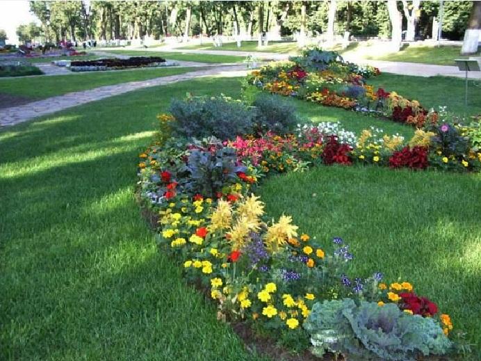 фото красивых клумб и цветников