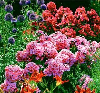 пересадка многолетников, пересадка многолетников, пересадка цветов, пересадка садовых цветов, пересадка многолетних цветов,пересадка цветов фото,цветы ирисы пересадка, пересадка растений, пересадка пионов, пересадка цветка, цветы пересадка