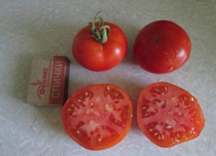 tomaty
