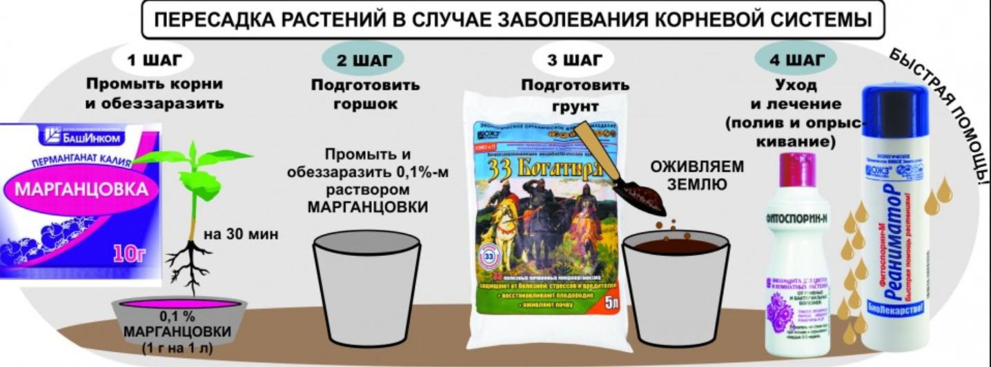 kusty-iz-magazina1